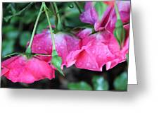 Hanging Roses Greeting Card