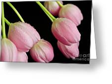 Hanging Tulips Greeting Card by Tracy Hall