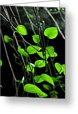 Hanging Vines Greeting Card