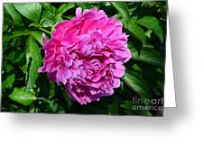 Happiness In Color Greeting Card