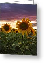 Happiness Is A Field Of Sunflowers Greeting Card