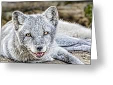 Happy Arctic Fox Greeting Card