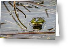 Happy As Afrog Greeting Card