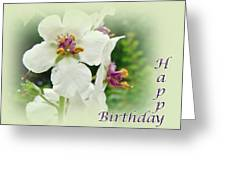 Happy Birthday - Floral - Moth Mullein Greeting Card