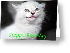 Happy Birthday Kitty Greeting Card