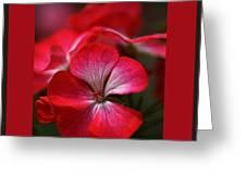Happy Bright Geranium And Design Greeting Card