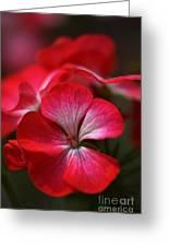 Happy Bright Geranium Greeting Card