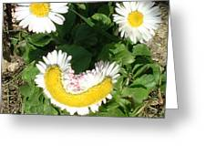 Happy Daisey Greeting Card