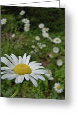 Happy Daisy Greeting Card