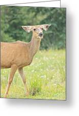 Happy Deer Greeting Card