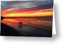 Happy Dog At Sunset Greeting Card