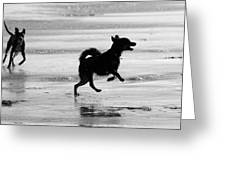 Happy Dog Black And White Greeting Card