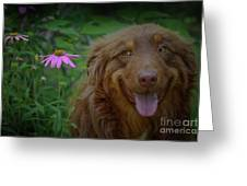 Happy Dog Days Greeting Card