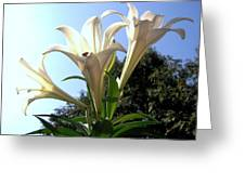 Happy Easter Lilies Greeting Card