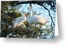 Happy Egret Mates Greeting Card