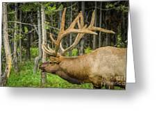 Happy Elk Greeting Card