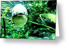 Happy Fish Greeting Card