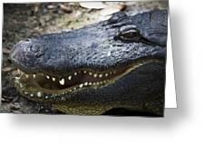 Happy Florida Gator Greeting Card