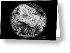 Happy Gator Black And White Greeting Card
