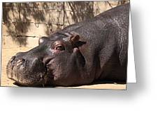 Happy Hippo Greeting Card by Laurie Lundquist