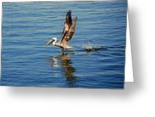 Happy Landing Pelican Greeting Card