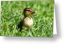 Happy Lil Duck Greeting Card