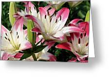 Happy Lilies Greeting Card