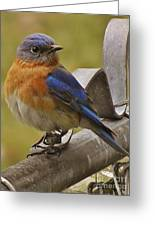 Happy New Year Male Bluebird Greeting Card