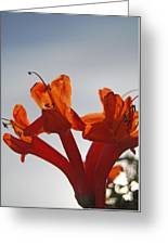 Happy Orange Greeting Card
