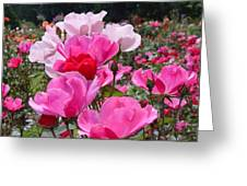 Happy Pinks Greeting Card