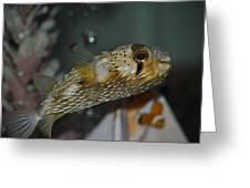 Happy Puffer Greeting Card