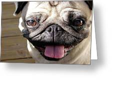 Happy Pug Greeting Card