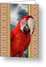 Happy Red Parrot Greeting Card