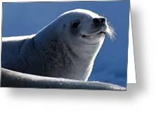Happy Seal Greeting Card