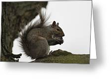 Happy Squirrel Greeting Card