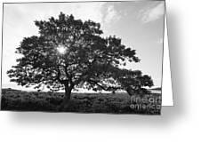Hapuna Beach Park Greeting Card