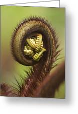 Hapuu Fern Frond Shoot Greeting Card