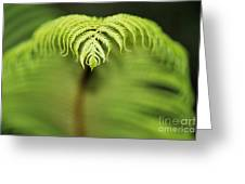 Hapuu Fern Greeting Card