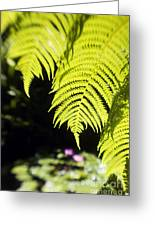Hapuu Ferns Greeting Card