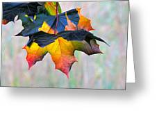 Harbinger Of Autumn Greeting Card by Sean Griffin