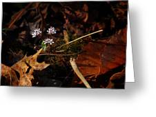 Harbinger Of Spring In Lost Valley Greeting Card