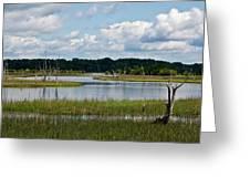 Harbor River Greeting Card