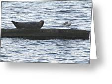 Harbor Seal Hangin With A Friend Greeting Card