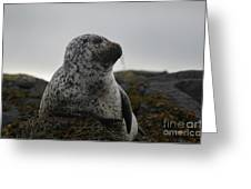 Harbor Seal In Stormy Weather Greeting Card