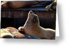 Harbor Seal In The Sun Greeting Card