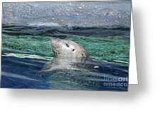 Harbor Seal Poking His Head Out Of The Water Greeting Card