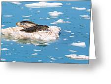 Harbor Seals On Clouds Of Ice Greeting Card