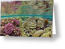 Hard Coral Carpets A Shallow Seafloor Greeting Card by Brian J. Skerry
