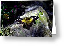 Hard Landing--clipper Butterfly Greeting Card