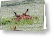 Hare 2 Day Greeting Card